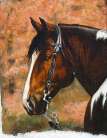 Horse Fotoalbum Kresleni Kone Kresleni Konici Hlava 2 Jpg