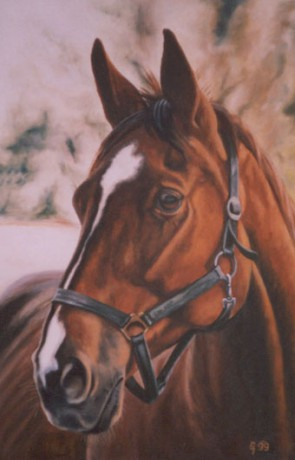 Horse Fotoalbum Kresleni Kone Kresleni Konici Hlava 3 Jpg